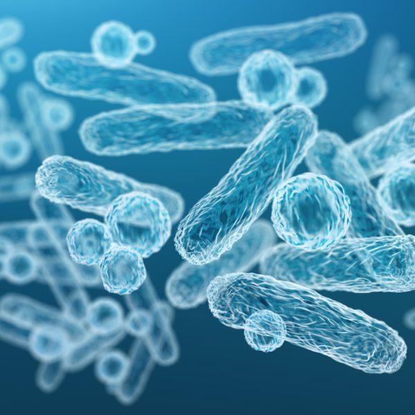 Microbioma intestinale e obesità: esiste una correlazione?
